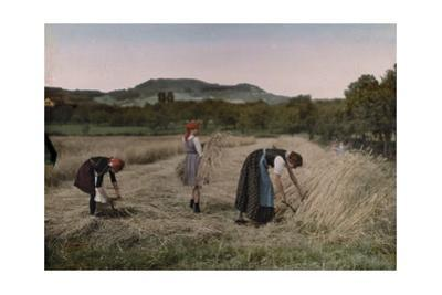 Three Women Cut, Bind and Gather Sheaves in a Field During Harvest by Hans Hildenbrand