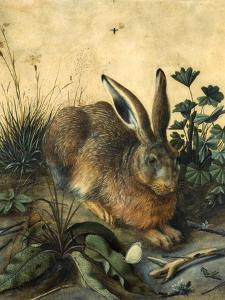 Hare by Hans Hoffmann