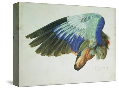 The Right Wing of a Blue Roller