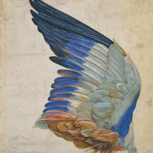 Wing of a Blue Roller, Copy of an Original by Albrecht Durer of 1512 by Hans Hoffmann