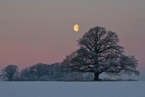 The Oak and the Moon by Hans Jørgen Lindeløff