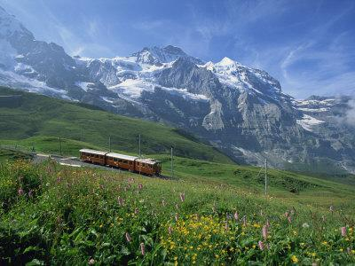 Wild Flowers on the Slopes Beside the Jungfrau Railway with the Jungfrau Beyond, Switzerland