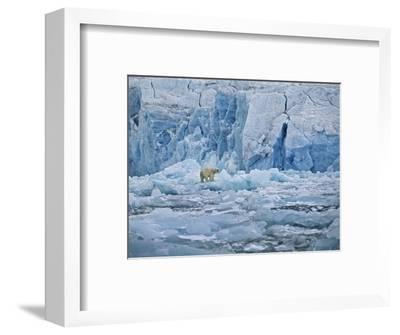 Polar Bear on Ice at Monaco Glacier