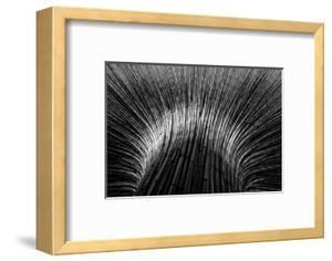 Bamboo by Hans-Wolfgang Hawerkamp