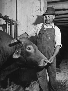 Farm Worker Petting One of the Cows Living on a Dairy Farm by Hansel Mieth