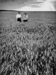 Men Standing in Wheat Field by Hansel Mieth