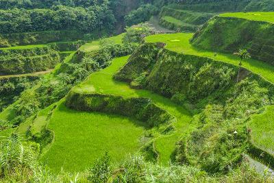 Hapao Rice Terraces, Part of the World Heritage Site Banaue, Luzon, Philippines-Michael Runkel-Photographic Print