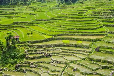 https://imgc.artprintimages.com/img/print/hapao-rice-terraces-part-of-the-world-heritage-site-banaue-luzon-philippines_u-l-q12t99g0.jpg?p=0