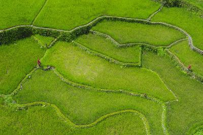 Hapao Rice Terraces, World Heritage Site, Banaue, Luzon, Philippines-Michael Runkel-Photographic Print