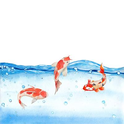 https://imgc.artprintimages.com/img/print/happy-koi-fishes-square_u-l-f8y61n0.jpg?p=0