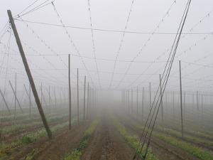Hop Garden in the Hallertau, Autumn, Fog by Harald Kroiss