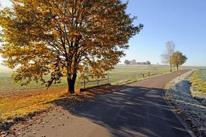Country Road in Autumn by Harald Lange
