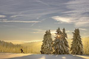 Germany, Thuringia, Neustadt / Rennsteig, Cross-Country Skier, Trees, Sun, Snow by Harald Schšn