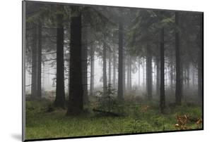 Germany, Thuringia, Rennsteig, Forest, Trees, Fog by Harald Schšn