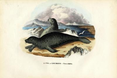 Harbour Seal, 1863-79-Raimundo Petraroja-Giclee Print
