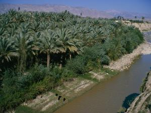 Date Palms Groves, Southern Area, Iran, Middle East by Harding Robert