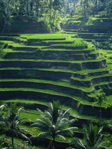 Rice Terraces, Bali, Indonesia, Southeast Asia by Harding Robert