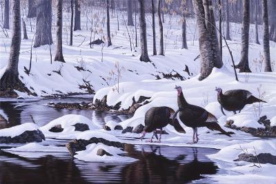 Hardwood Creek - Wild Turkeys-Wilhelm Goebel-Giclee Print