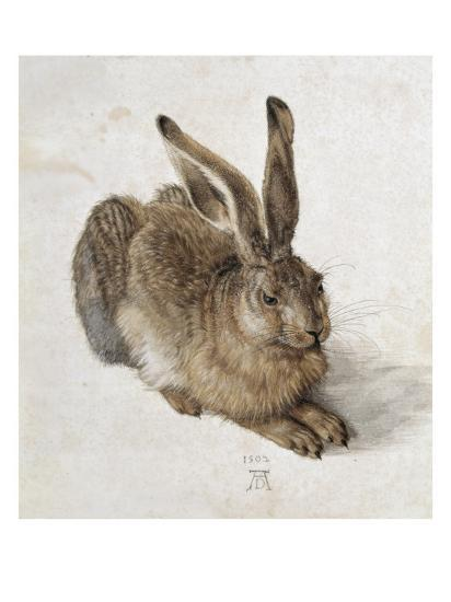 Hare-Albrecht D?rer-Premium Giclee Print