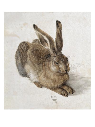 Hare-Albrecht D?rer-Art Print