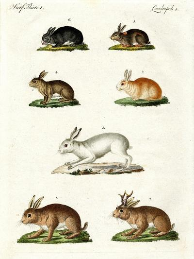Hares and Rabbits--Giclee Print