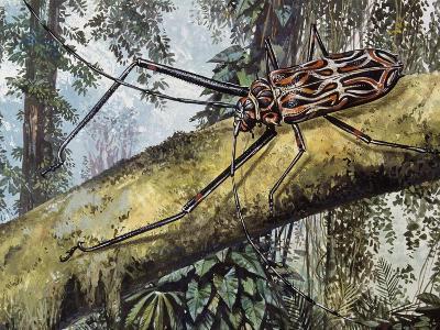 Harlequin Beetle (Acrocinus Longimanus), Cerambycidae--Giclee Print