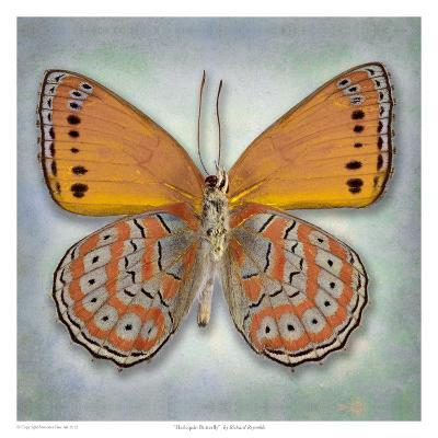 Harlequin Butterfly-Richard Reynolds-Art Print