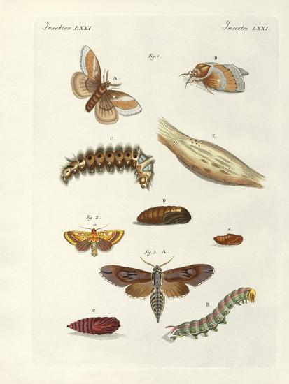Harmful Butterflies--Giclee Print