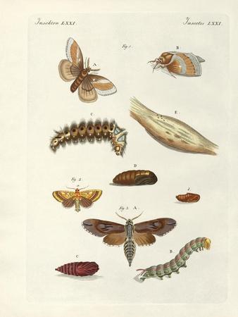 https://imgc.artprintimages.com/img/print/harmful-butterflies_u-l-pvr1k80.jpg?p=0