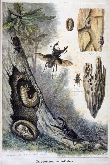Harmful Insects, 1897-F Meaulle-Giclee Print
