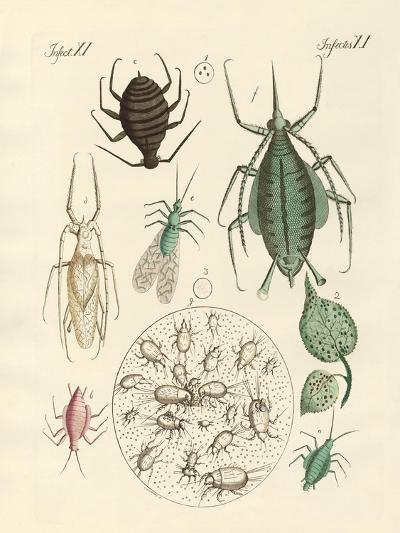 Harmful Insects--Giclee Print