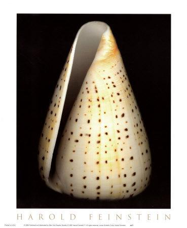 Lesser Butterfly Cone