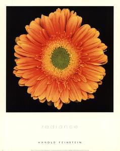 Radiance by Harold Feinstein