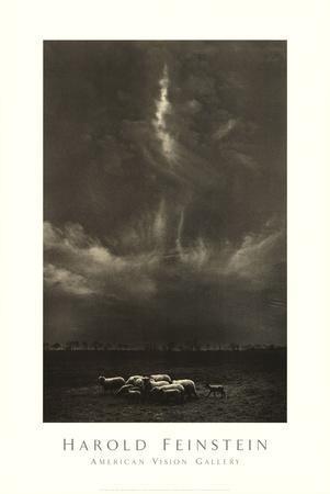 Sheep Under Cloud