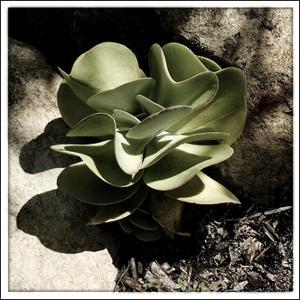 A Little Green Plant by Harold Silverman