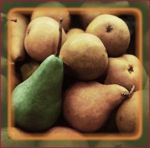 Bartlet Pears by Harold Silverman