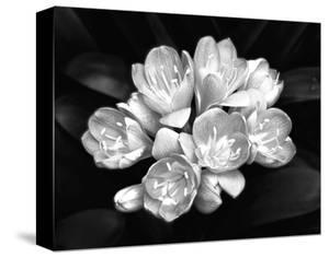 Beautiful Flowers Black And White Photography Canvas Artwork For
