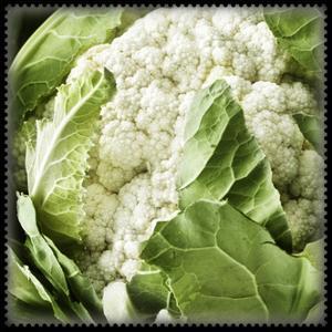 Caulliflower Veggy Green by Harold Silverman
