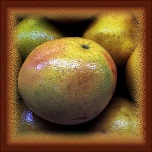 Large Grapefruit by Harold Silverman