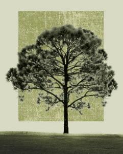 Natures Shapes I by Harold Silverman