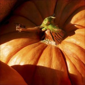 Pumpkin by Harold Silverman