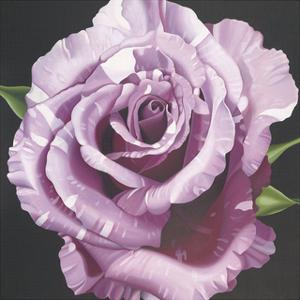 Rose by Harold Silverman