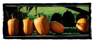 Row of Pumpkins 2 by Harold Silverman