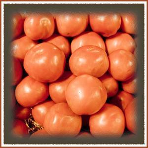 Tomatos Galore by Harold Silverman