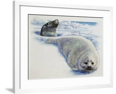 Harp Seal or Saddleback Seal (Phoca Groenlandica), Phocidae, Cow in Hole in Ice and Whitecoated Pup--Framed Giclee Print