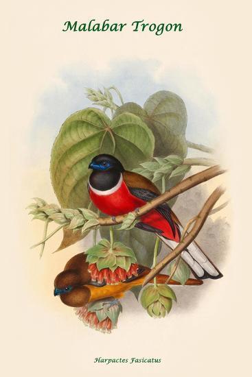 Harpactes Fasicatus-John Gould-Art Print