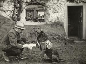 A WWI allied soldier bandages the paw of a Red Cross working dog. by Harriet Chalmers Adams