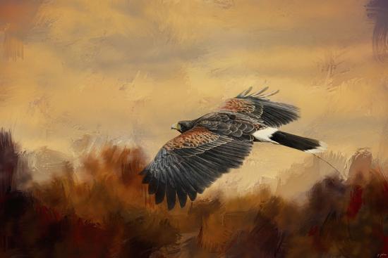 Harris Hawk in Autumn-Jai Johnson-Giclee Print