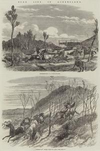 Bush Life in Queensland by Harrison William Weir