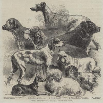 National Exhibition of Dogs at Birmingham